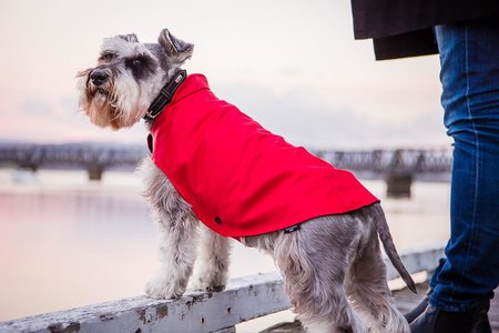 buy dog raincoats waterproof