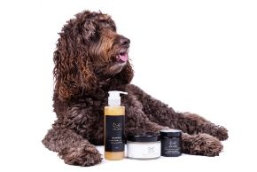 buy dog shampoo grooming products