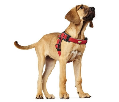 dog harness nz