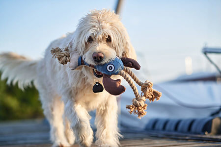 dog toys nz category