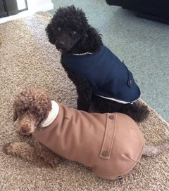 finn jess winter dog coats