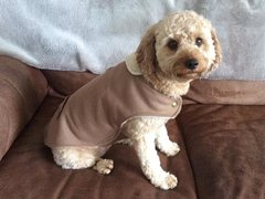 indie windsor dog coat
