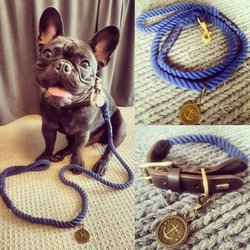 nautic blue collar and leash