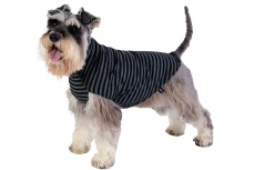 dog-jumper-merino-black-stripe-lifestyle2
