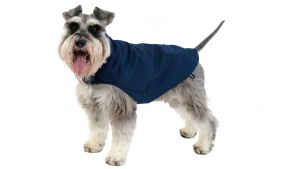 dog-raincoat-blue-lifestyle