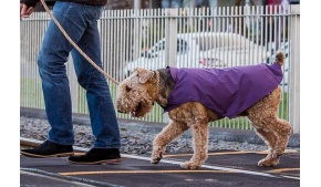 purple-waterproof-dog-coat-twilly
