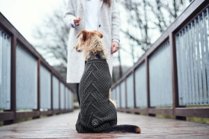 malmo-dog-sweater-grey-lifestyle