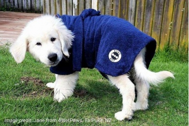 blue-dog-robe-lifestyle